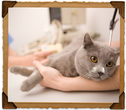 Health Maintenance Services of Bryan Road Animal Hospital